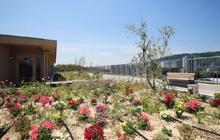 季節の花咲く屋上緑化庭園